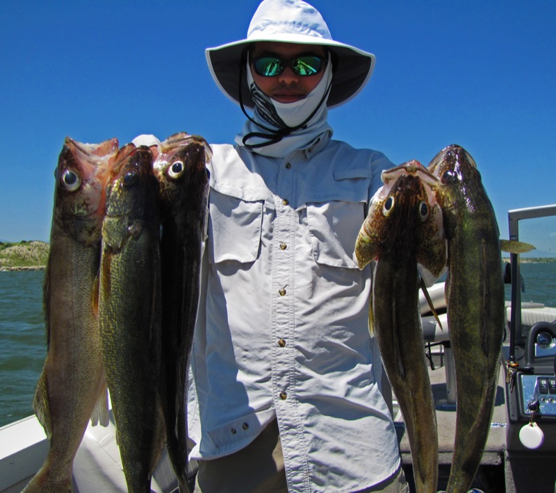 Top colorado fishing locations guide antero fishing for Colorado fish species